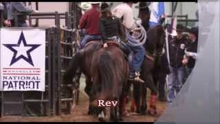 Seasoned Rodeo/1d Barrel & Pole Horse For Sale