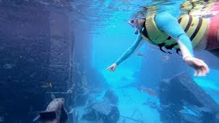 An Ellen Fan Meets Incredible Sea Animals at Atlantis Paradise Island in the Bahamas!