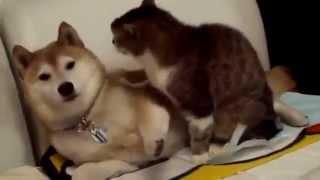 Забавные и милые Котята 2015