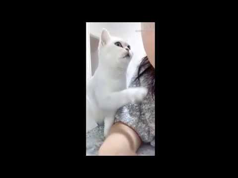 Cute Cats And Dogs Funny Videos Compilation 2019
