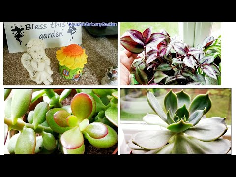 My indoor plants with Names अंदर चलने वाले पौधे/Organic Gardening