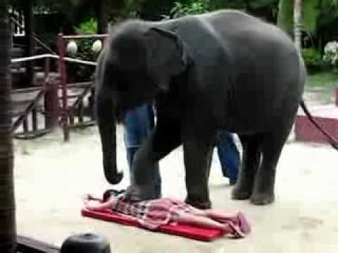 Elephant_Attack_[www.hirufm.lk].wmv