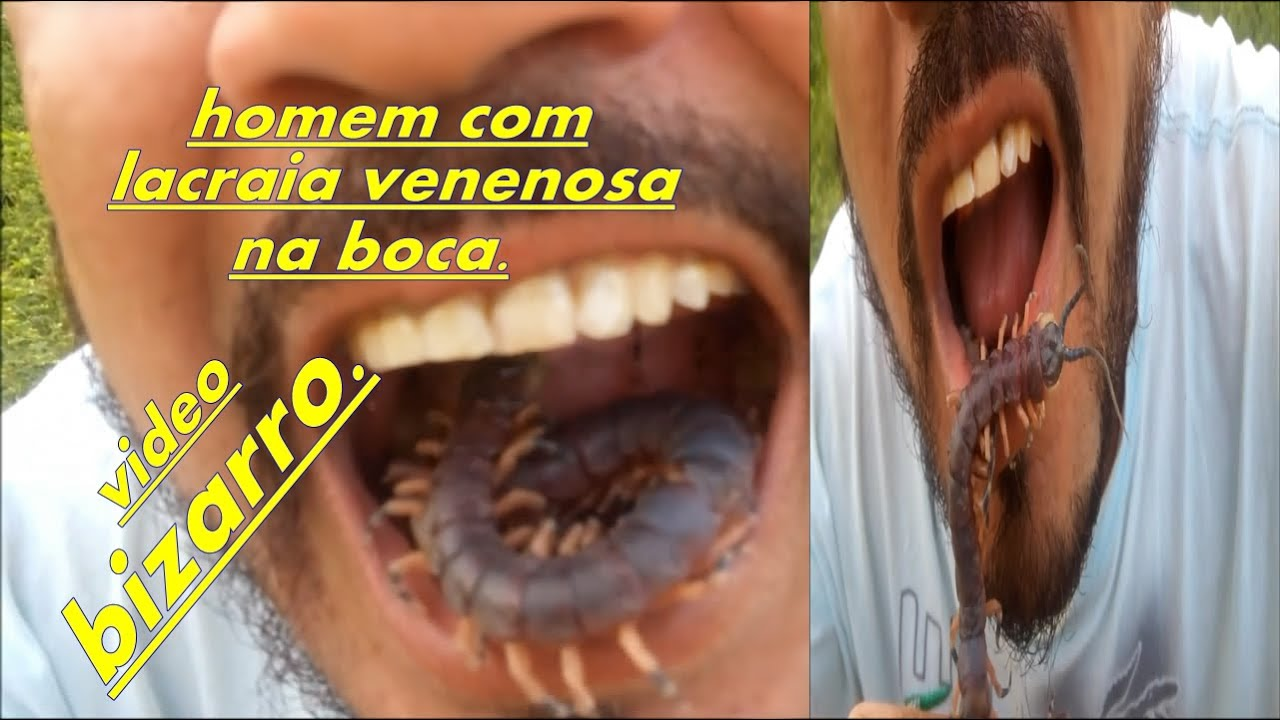 bizarro homem coloca lacraia venenosa dentro da boca youtube