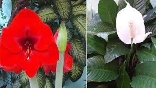 Plantas que são um Espetáculo da Natureza