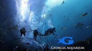 Georgia Aquarium Largest Aquarium in the World