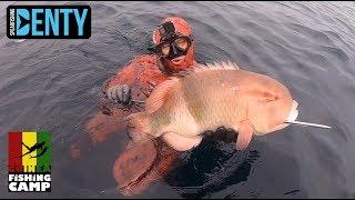 Chasse sous-marine le Blackbarred Hogfish au Guinéa Fishing Camp
