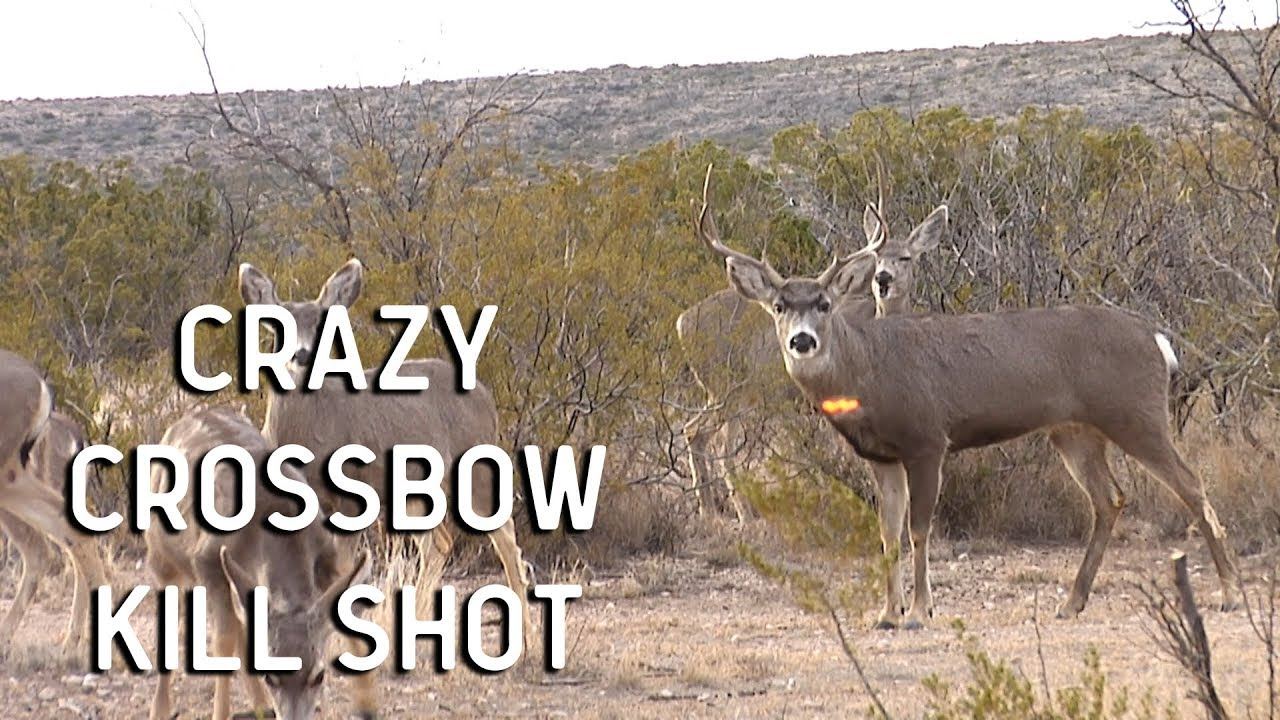 Craziest Crossbow Deer Hunt Ever