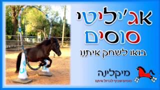 אג'יליטי סוסים ופונים עם בילי  Horse & Pony Agility with Billy