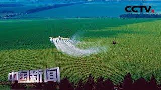 [中国新闻] 壮丽70年 奋斗新时代·黑龙江北大荒 从亘古荒原到中华大粮仓 | CCTV中文国际