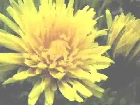 Botanica - Photo Collage