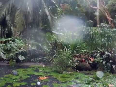 Fiji's Garden of the Sleeping Giant