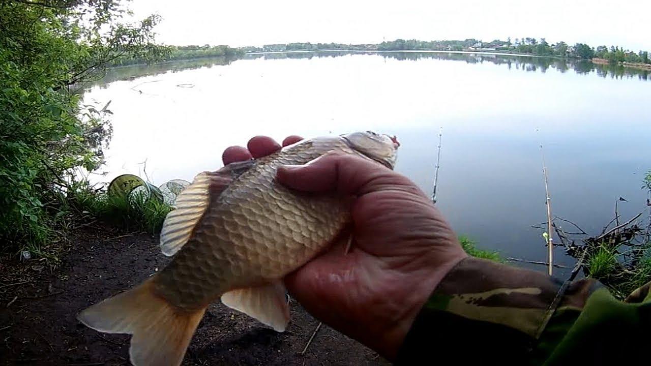 Рыбалка в речицком районе на карася