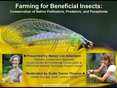Farming for Beneficial Insects: Pollinators, Predators and Parasitoids