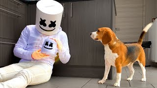 Funny Dogs Vs Marshmello Prank : Dogs Louie and Marie