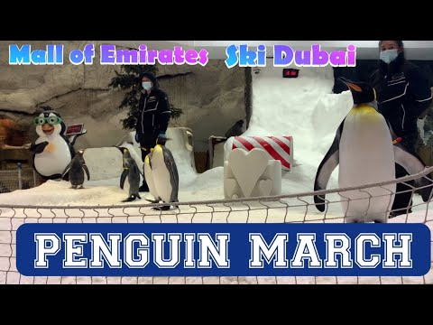 Penguin March at Ski Dubai | Mall of Emirates