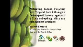 Saving the Philippine Banana Industry from the Dreaded Panama Disease [Part 2/2]
