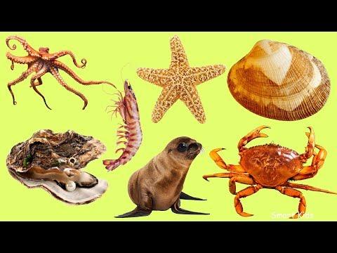 Животные для детей    Морские животные    Учим название и звуки морских животных   Учим животных