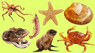 Животные для детей |  Морские животные |  Учим название и звуки морских животных | Учим животных
