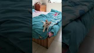 #159 [Cats and dogs funny family]A very good cat演技高超的猫咪