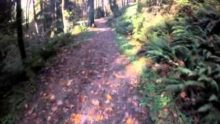 Firelane 1, Forest Park, MTB, PDX