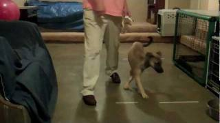 Teaching A Puppy Not To Jump At Hands