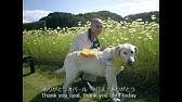 盲導犬アトム号が行方不明です Youtube