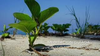 SINTONIZACION: Meditacion Guiada de 10 Minutos| A.G.A.P.E. Wellness