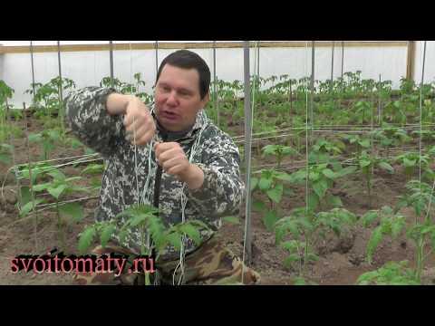Простой способ подвязки высокорослых томатов