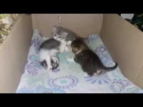 Cat Stage -so weet kittens