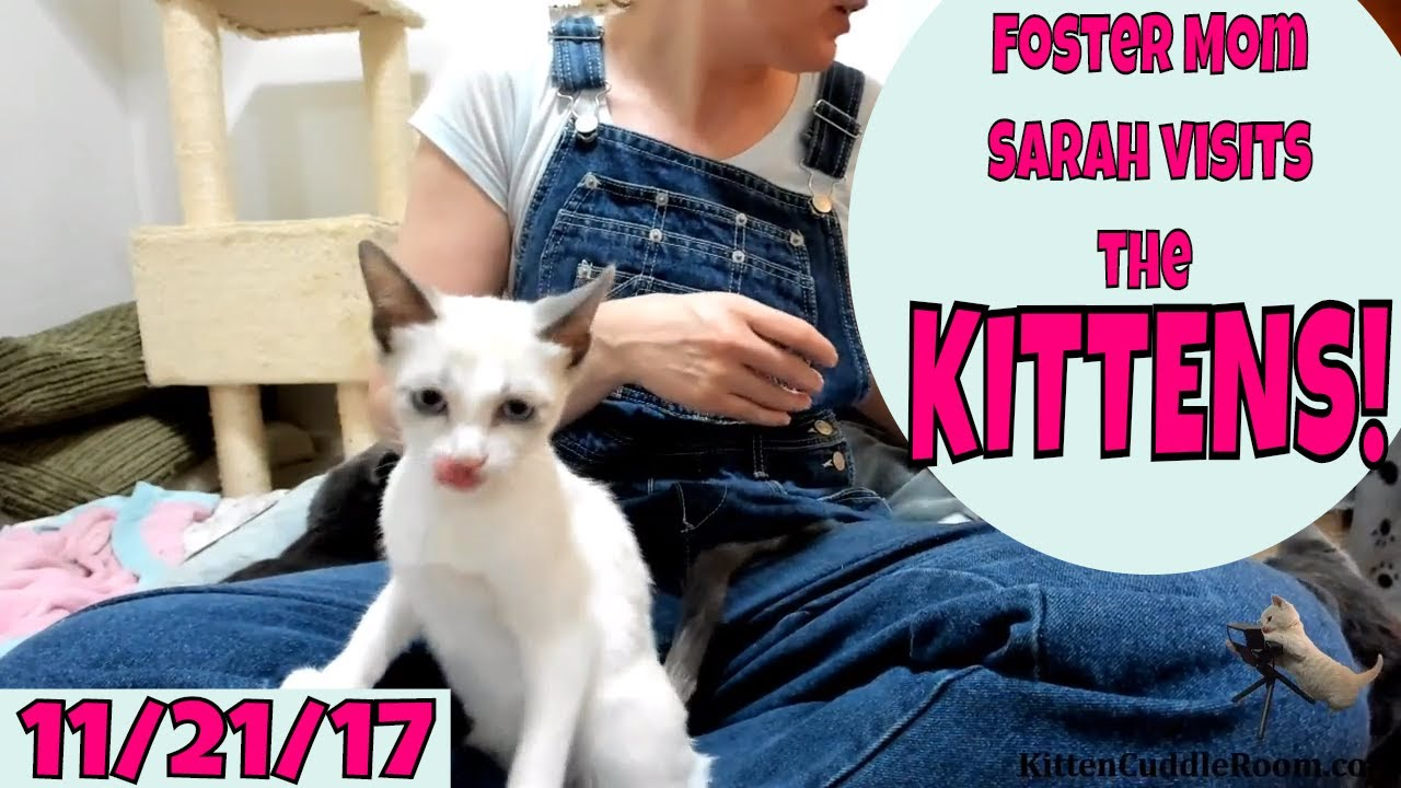 Foster Mom Sarah s Visit 11 21 17 Kitten Cuddle Room LIVE 24 7