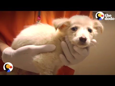 New Animal Hospital Helps Stray Dogs In Thailand | The Dodo