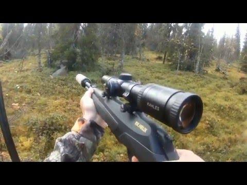 Älgjakt med Karelskbjörnhund
