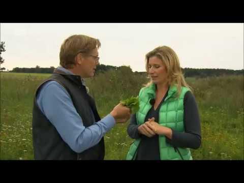 NDR: Gärtnern natürlich: Supertip: Kartoffelwasser gegen Giersch