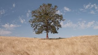 """""""The Giving Tree"""" A short film"""