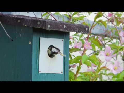 Der vogelfreundliche Garten