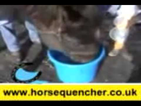 Horse Quencher talking Horse
