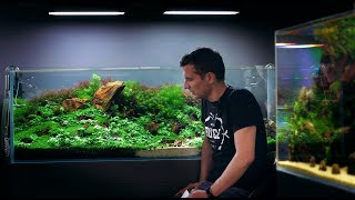 LEARN MORE ABOUT THIS STUNNING 450L PLANTED AQUARIUM BY GREEN AQUA