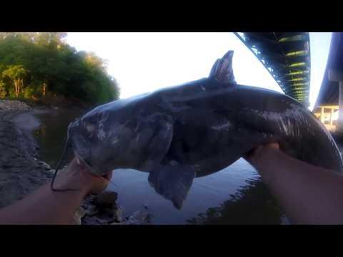 Ugliest Blue Cat On The River - Missouri River, MO