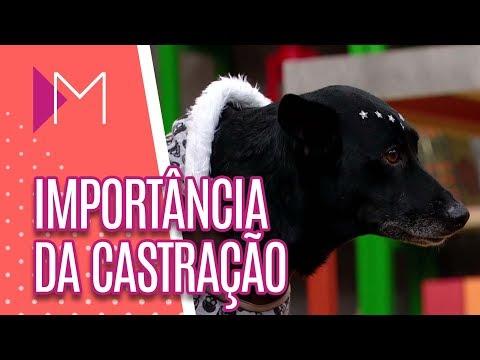 Importância da castração de cães e gatos - Mulheres (18/04/18)