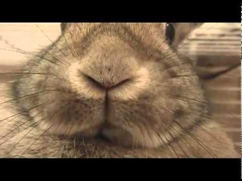 почему кролик часто дышит