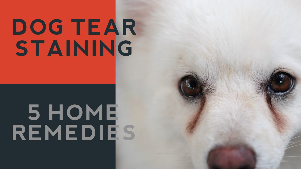 How To Stop Tear Stains On Dogs