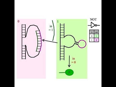 How do I build a NOT gate in a biological arithmetic logic unit?