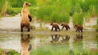 Таня очень любит медвежат и смотрит их.Прямой онлайн эфир