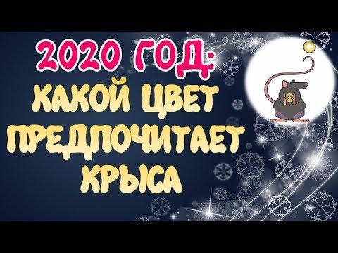 Цвета 2020 года для года крысы как привлечь успех и удачу