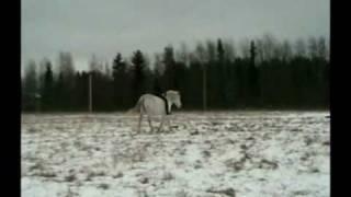 """Конный клуб """"Чайка"""". Пробная езда."""
