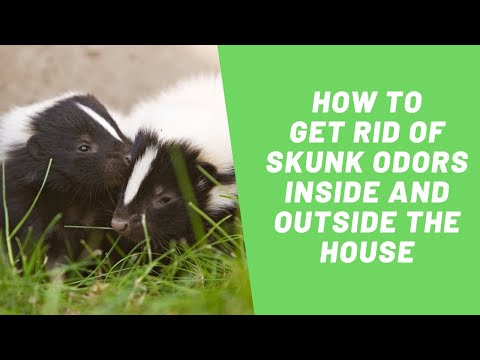 SOS Odours | How to Get Rid of Skunk Odors Inside and Outside the House