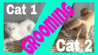 Стрижка кошек дома. To groom a cat.(Зачем я стригу кошек. Как кошки переносят стрижку. Кошки до и после стрижки. Что лучше: стричь или вычесывать..., 2016-03-09T14:33:19.000Z)