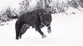 Dog survives radical driver 😂 (life at Ddk9)