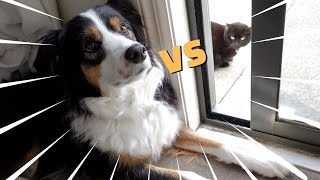 Dog vs Cat, who's gonna win this time?!
