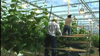High Tech Greenhouse